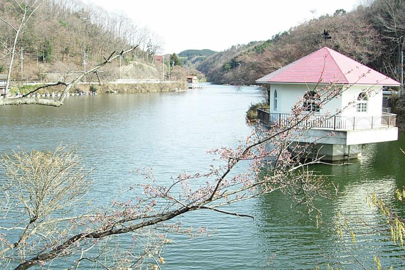 へらぶな釣りの聖地とも言える横利根川。第二カーブ、ポプラ前、看板前など、昔はたくさんの名ポイントがあり、夜明け前から釣り人が浮かんで夜明けを待っていました。その後、朝の出船時間が決められるようになりました