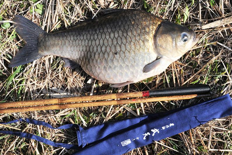 50cm上を含む大型がそろった日の河口湖のへら。写真のへらは47cmほどだが、尻尾まできれいなへらだった。大型狙いでは、竿も重要。「硬い」ではなく「胴に乗せられる」竿を選ぶと、取り込みやすい。ただ硬いだけの竿では、魚の力と戦ってしまい、力をいなすことができない